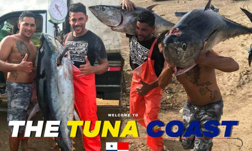 Welcome to the Tuna Coast
